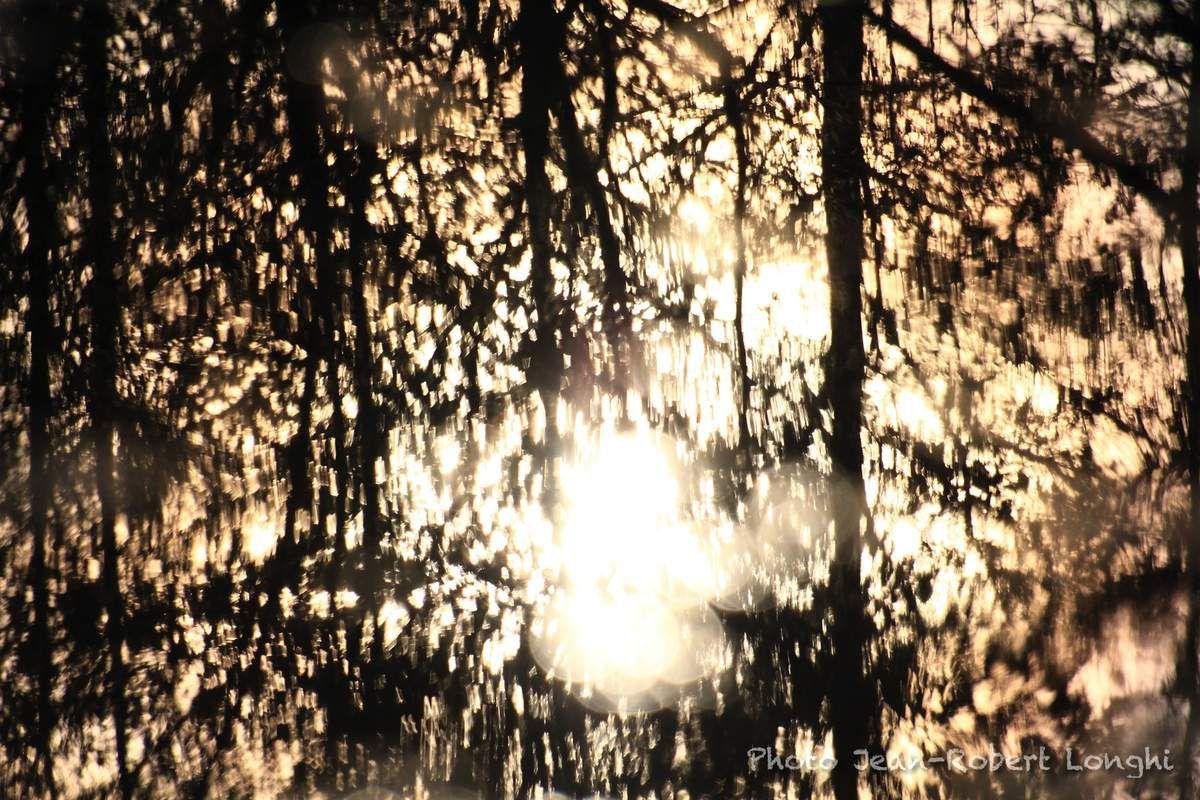 Couleurs d'automne dans le marais de Saône