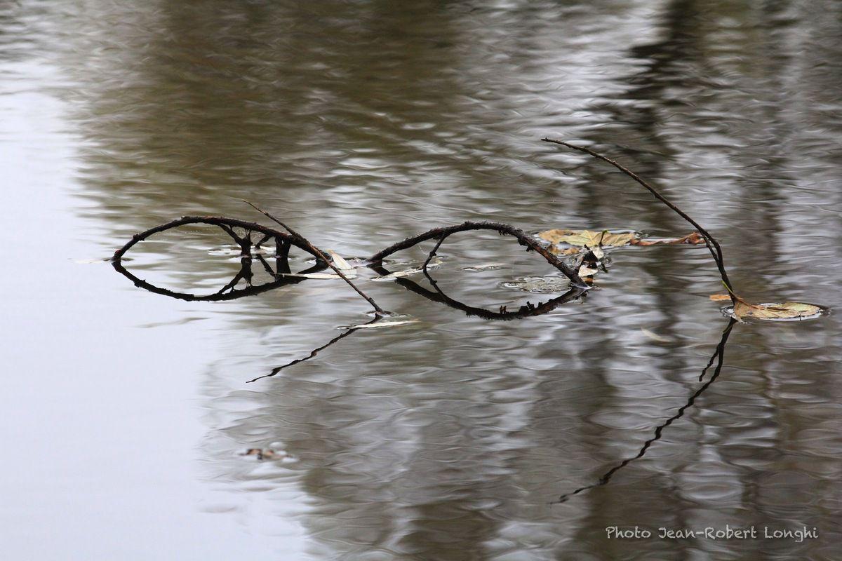 Gris d'automne, pluie d'automne sur le marais