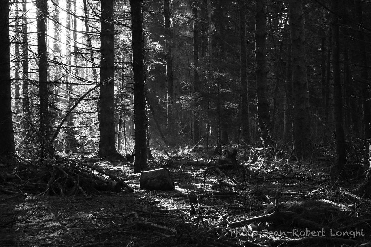 Automne dans les bois des Tourbières de Frasne, dans le Doubs