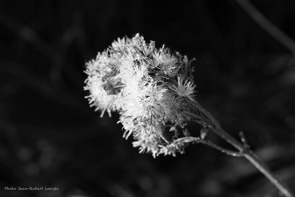 Matin d'automne, Marais de Saône
