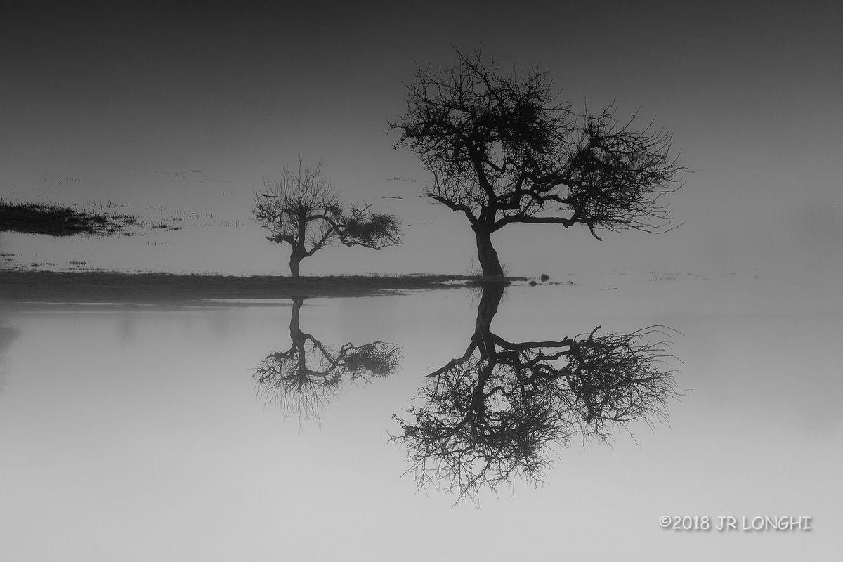 Marais de Saône, série noir et blanc N°17 - Photographie non libre de droits ©2018 Jean-Robert Longhi