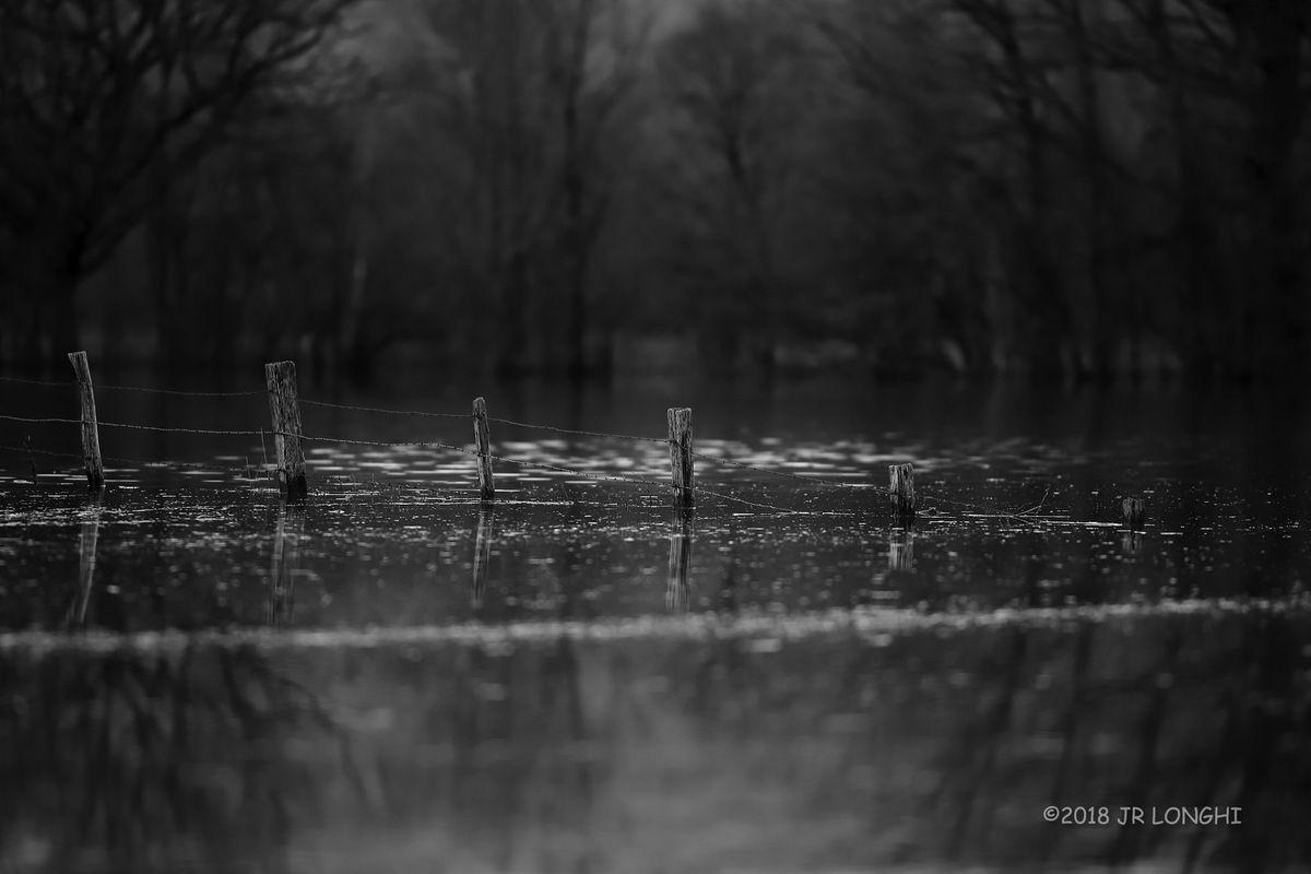 Marais de Saône, série noir et blanc N°8 - Photographie non libre de droits ©2018 Jean-Robert Longhi