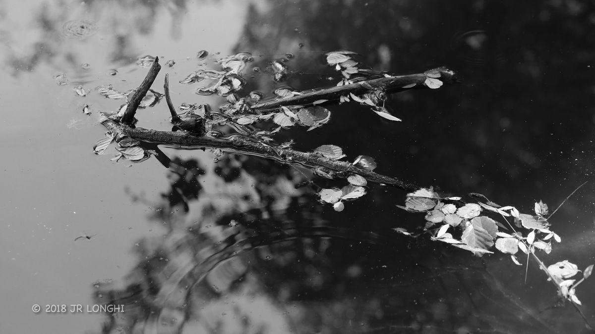 8- Photographie non libre de droits ©2018 Jean-Robert Longhi