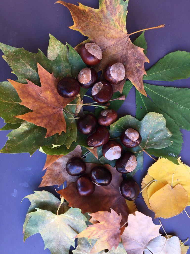 Notre guirlande d'automne 🍁🍁🍁