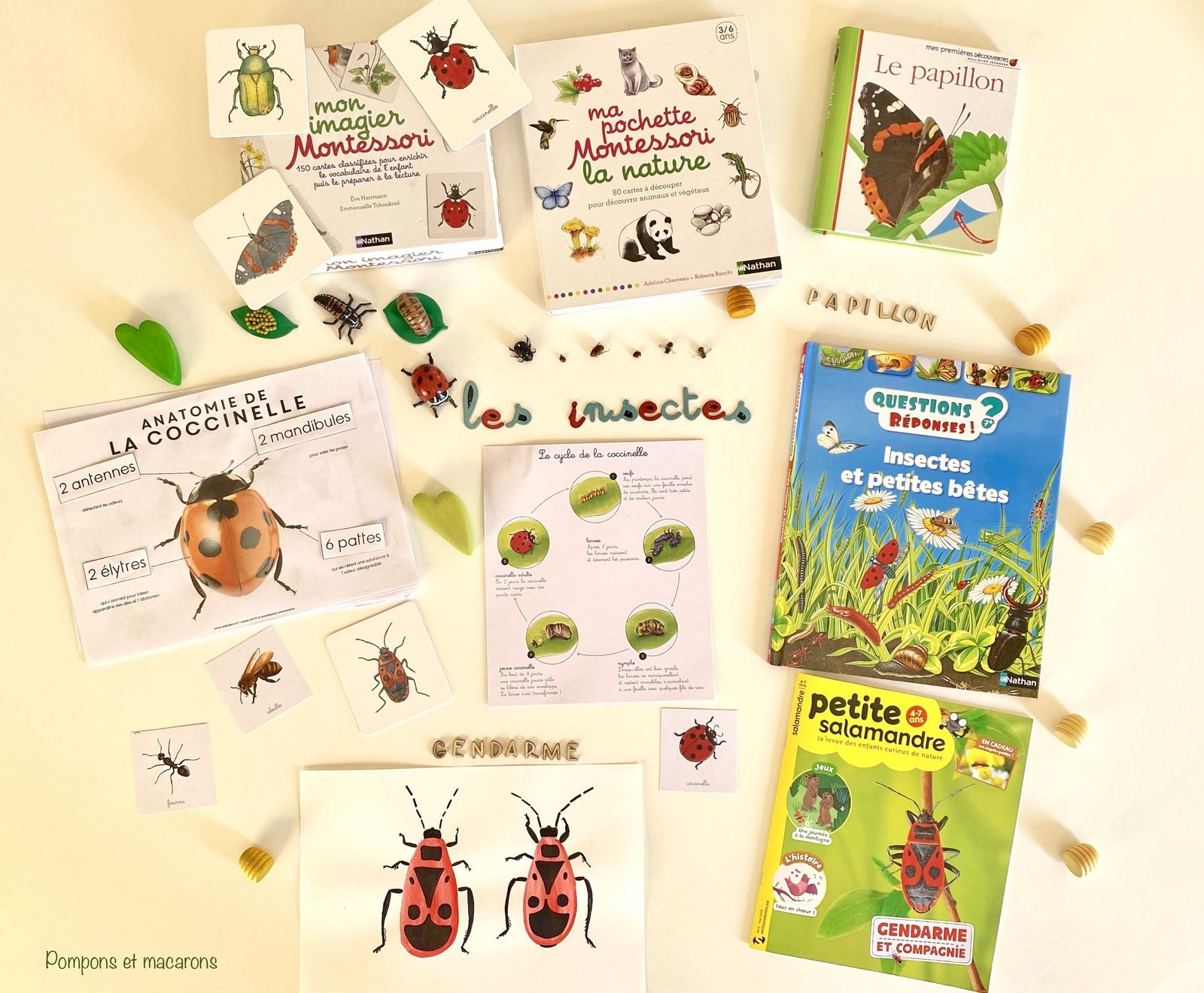 Activités sur le thème des insectes