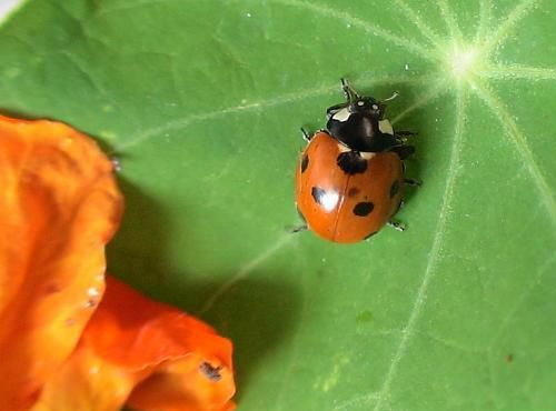 S'ils sont plutôt orange,  je suis jeune : 1 à 2 mois.