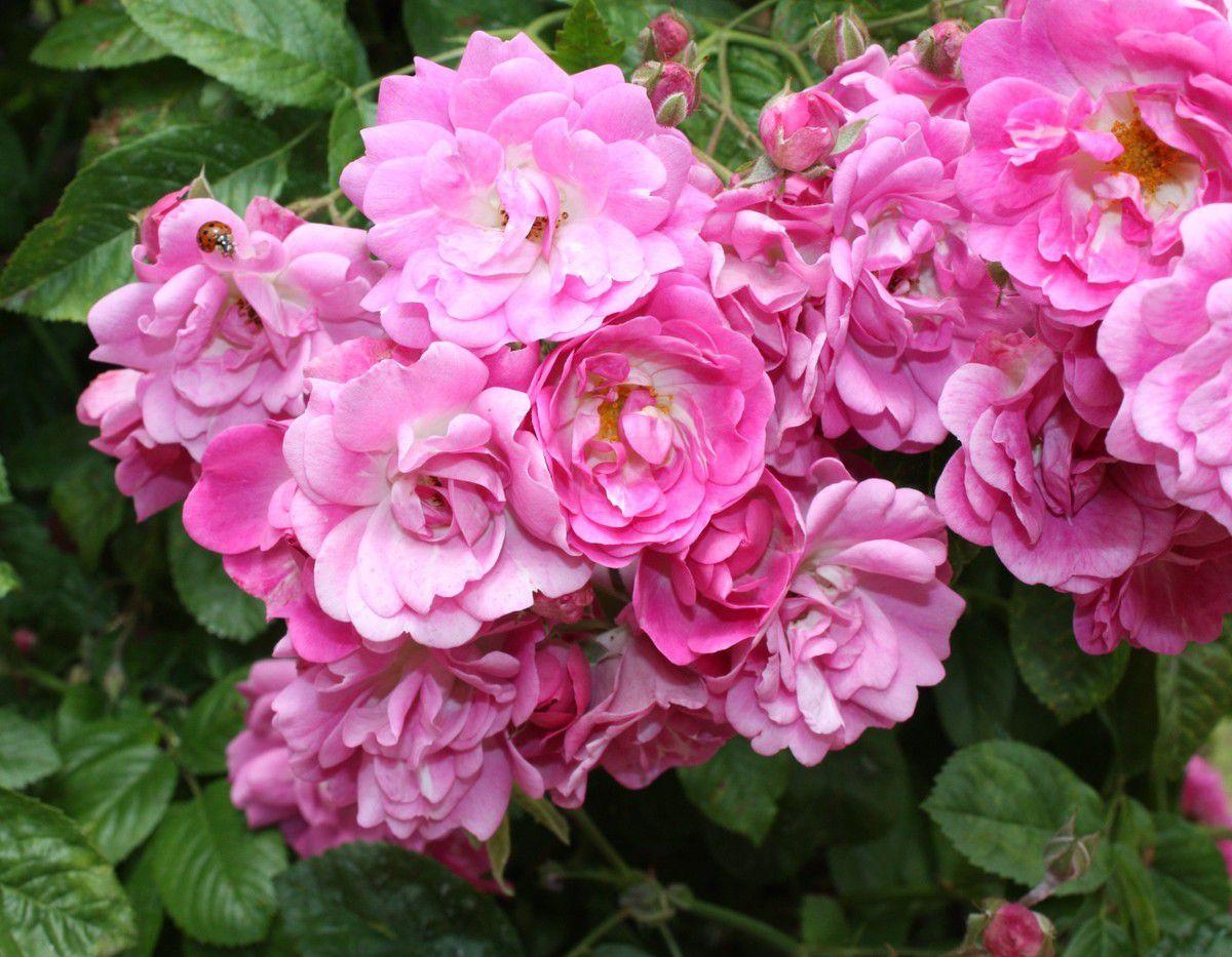 photo ajp 05 2019 l'Haÿ les roses