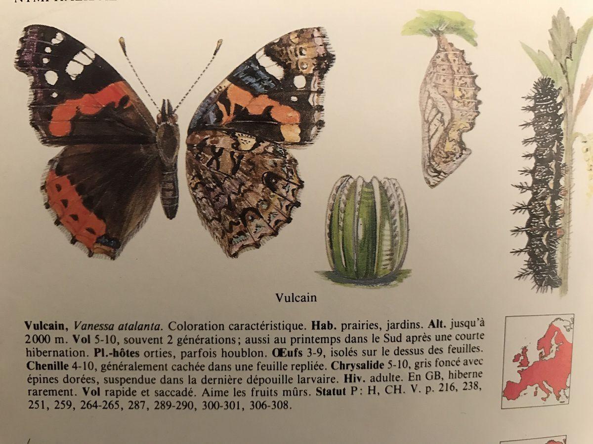 Les papillons du moment