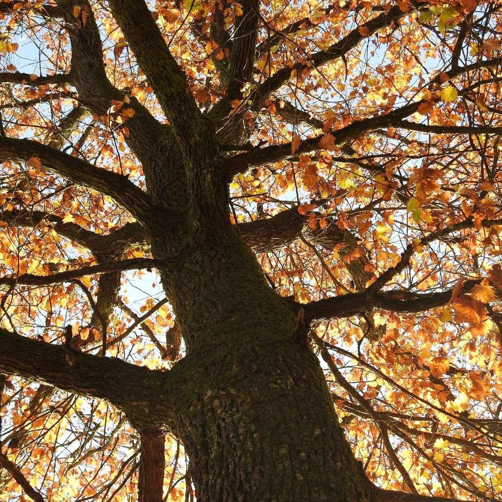 Le chêne, hotspot de biodiversité