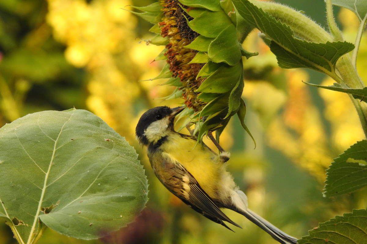 nourrir les oiseaux en été donner à boire eau