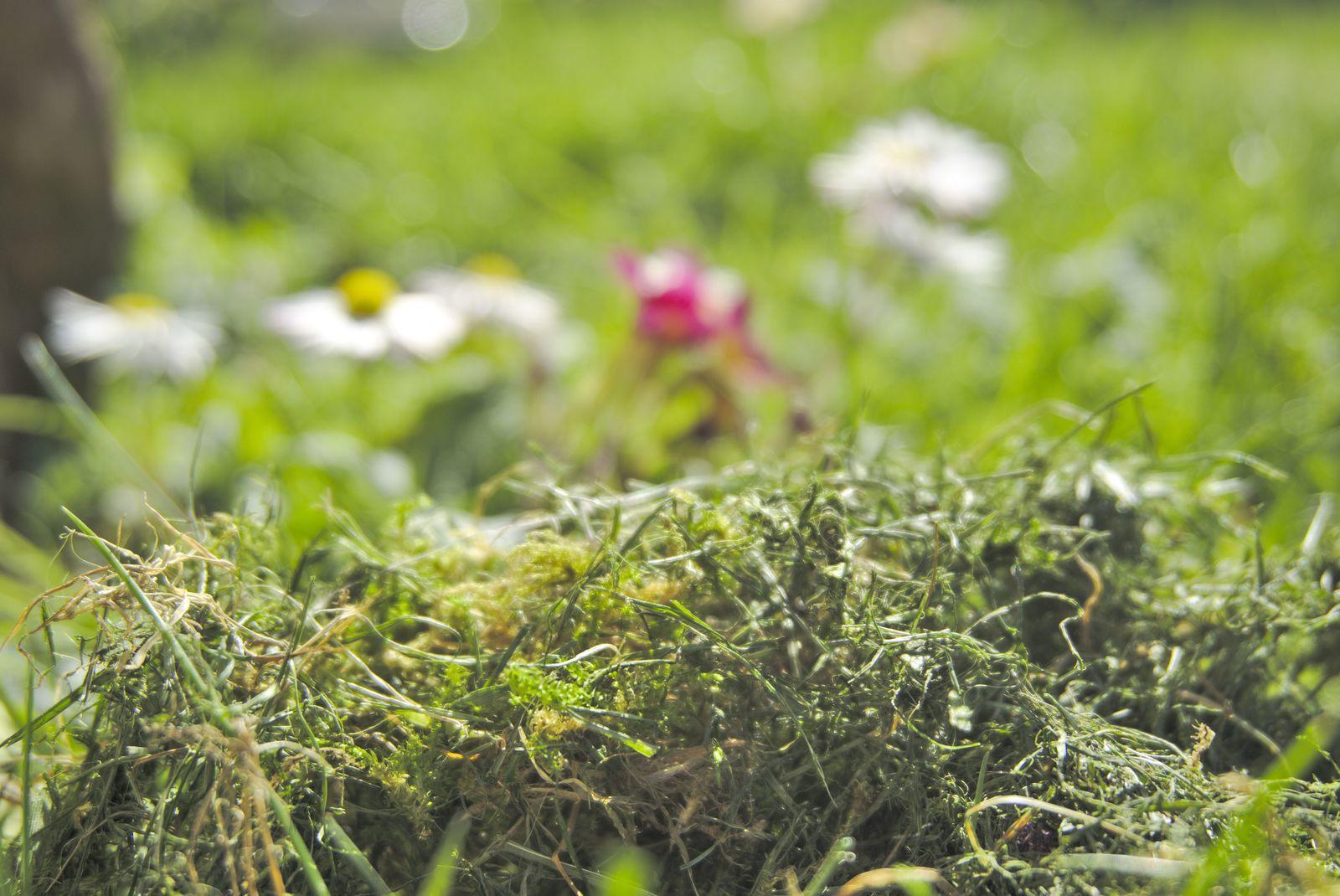 13/52 , semaine du 23 au 29 Mars - ça sent bon - Vous sentez la bonne odeur de l'herbe coupée ?