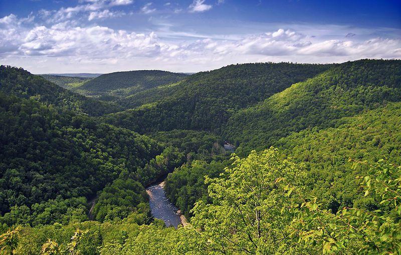 (World's End State Park, Pennsylvanie, photo de Nicholas A Tonelli, www.flickr.com, 01/06/2008, wikipédia)
