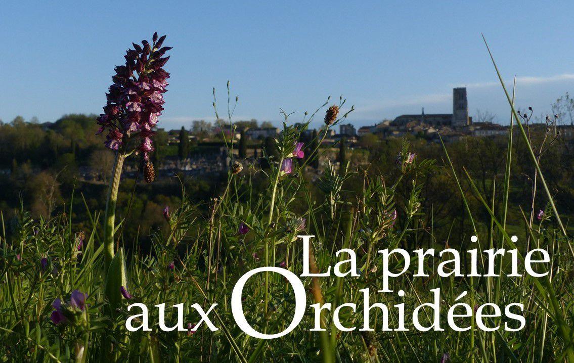 lectoure cathédrale orchidée gascogne lomagne botanique