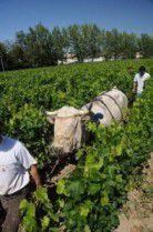 Vigne Labour