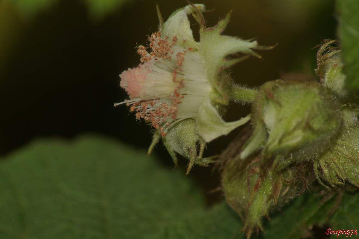 Nature, nature 974, Nature Réunion, nature de la Réunion, nature à la Réunion, flore introduite, flore introduite 974, flore introduite Réunion, flore introduite à la Réunion, flore introduite de la Réunion, flores introduites, flores introduites 974, flores introduites Réunion, flores introduites à la Réunion, flores introduites à la Réunion, fleur, fleur 974, fleur Réunion, fleur de la Réunion, fleur à la Réunion, fleur introduite, fleur introduite 974, fleur introduite Réunion, fleur introduite de la Réunion, fleur introduite à la Réunion, fleurs, fleurs 974, fleurs Réunion, fleurs de la Réunion, fleurs à la Réunion, fleur introduite, fleur introduite 974, fleur introduite Réunion, fleur introduite de la Réunion, fleur introduite à la Réunion, fleurs, fleurs 974, fleurs Réunion, fleurs de la Réunion, fleurs à la Réunion, fleurs introduites, fleurs introduites 974, fleurs introduites Réunion, fleurs introduites de la Réunion, fleur blanche, fleur blanche 974, fleur blanche Réunion, fleur blanche de la Réunion, fleur blanche à la Réunion, fleurs blanches, fleurs blanches 974, fleurs blanches Réunion, fleurs blanches de la Réunion, fleurs blanches à la Réunion, fleur blanche vif, fleur blanche vif 974, fleur blanche vif Réunion, fleur blanche vif de la Réunion, fleur blanche vif à la Réunion, fleurs blanches vifs, fleurs blanches vifs 974, fleurs blanches vifs Réunion, fleurs blanches vifs de la Réunion, fleurs blanches vifs, à la Réunion, fleur blanche introduite, fleur blanche introduite 974, fleur blanche introduite Réunion, fleur blanche introduite de la Réunion, fleur blanche introduite à la Réunion, fleurs blanches introduites, fleurs blanches introduites 974, fleurs blanches introduites Réunion, fleurs blanches introduites de la Réunion, fleurs blanches introduites à la Réunion, fleur blanche vif introduite, fleur blanche vif introduite 974, fleur blanche vif introduite Réunion, fleur blanche vif introduite de la Réunion, fleur blanche vif introduite à la Réu