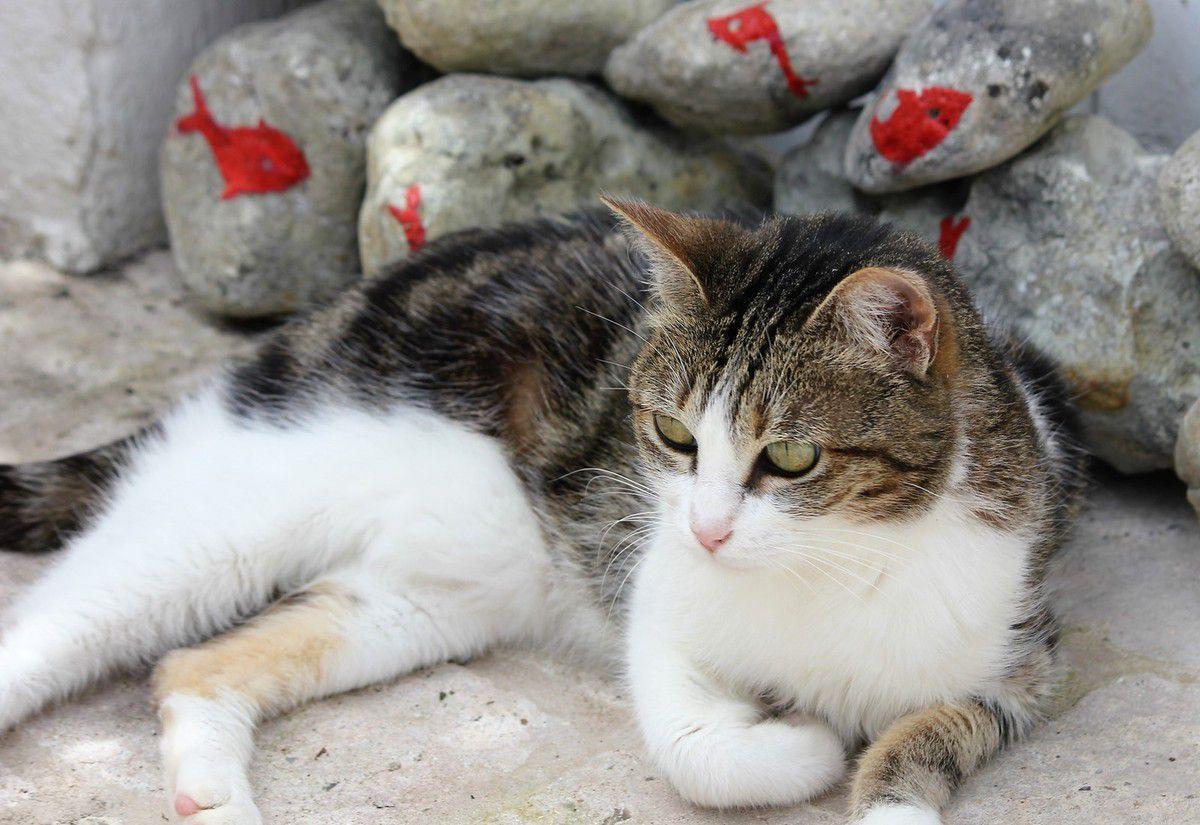 Deux chattes recueillies...au refuge du Château d'oléron