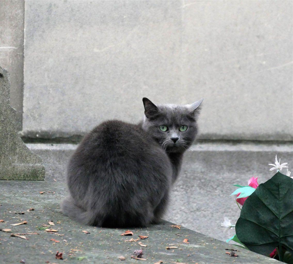 La mort d'un chat. Poème.