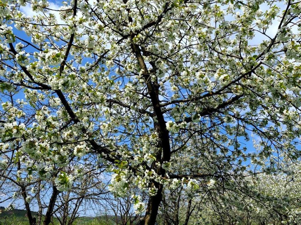 Rando du 17 avril - Dans la Eggenertal - Edito
