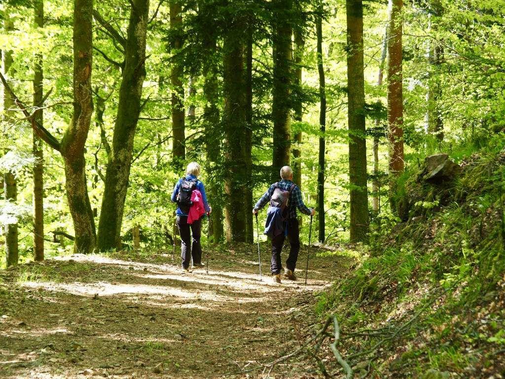 Rando du 14 mai - Forêt reculée de Soultz et sentiers de la guerre 14/18 du HWK