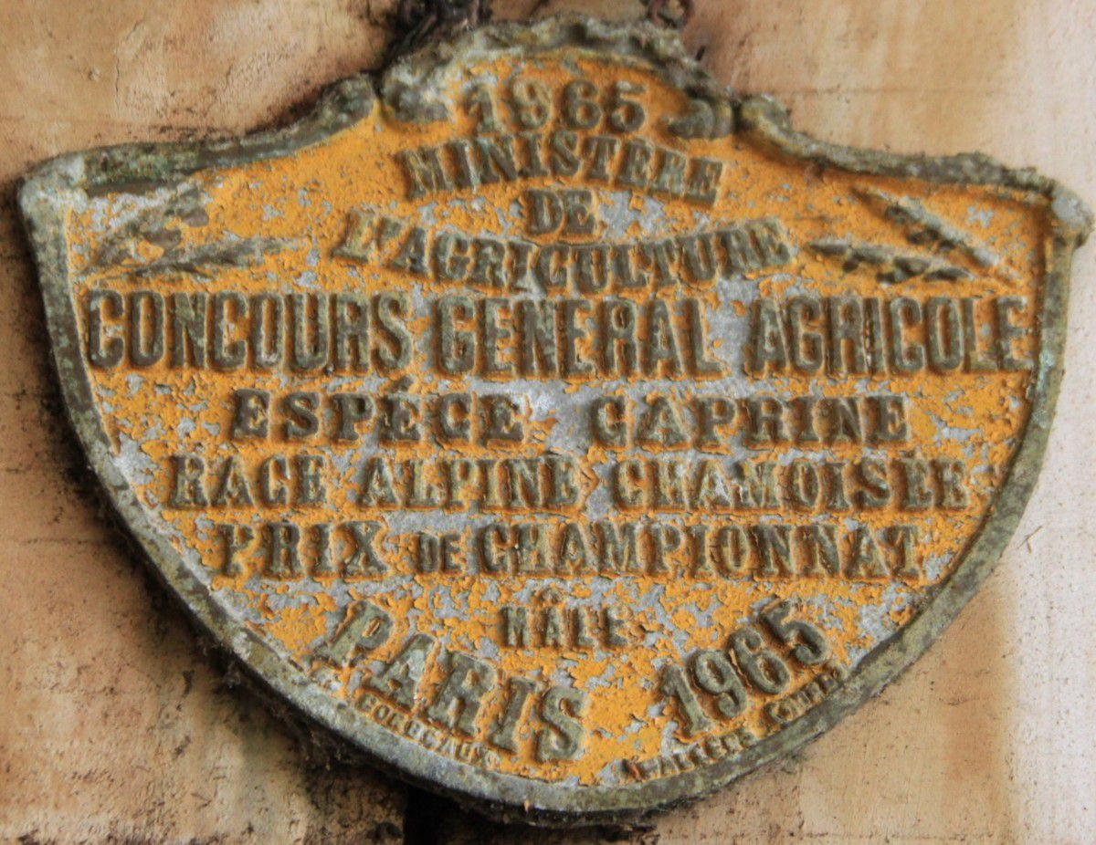 Prix remportés par l'élevage de Grillemont (Mme Colette de SAINT-SEINE) en 1962, 1964, 1965