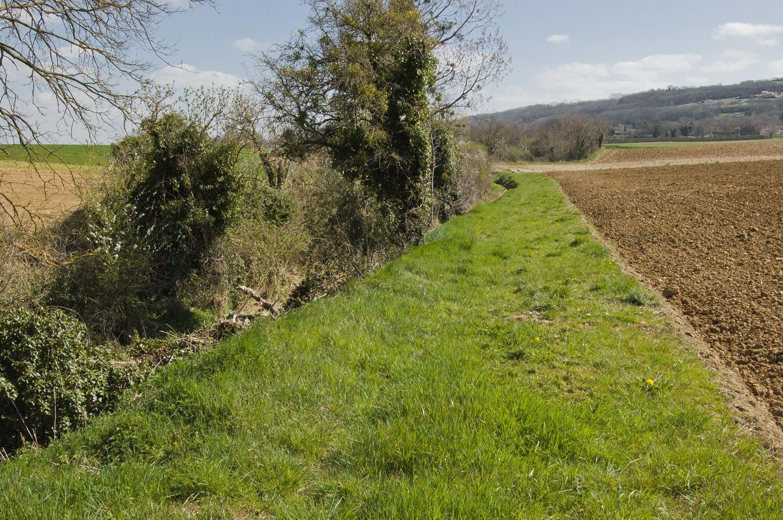 Bande enherbée et ripisylve (dégradée!) le long du ruisseau de l'Argentelle (Anneyron-26)