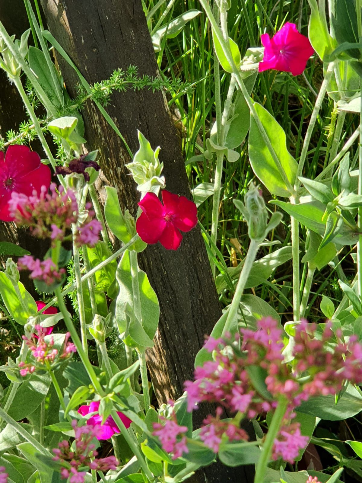 Conseils de jardinage pour le lundi 18 mai 2020