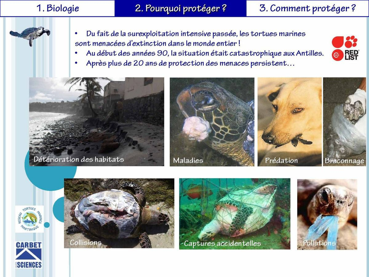 Les tortues de Martinique, première animation dans le cadre de notre projet AME