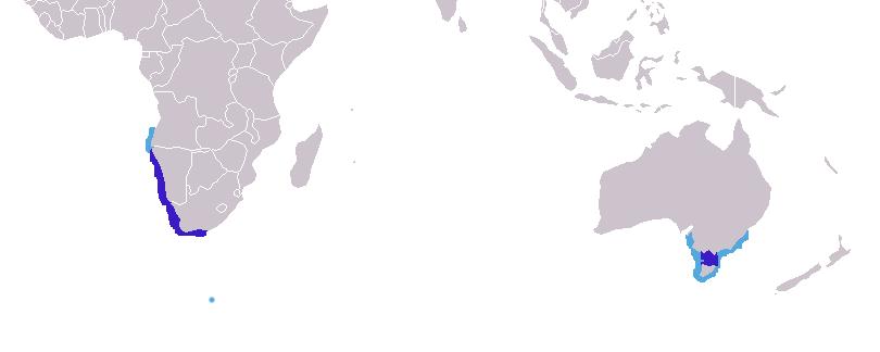 Le phoque du Cap