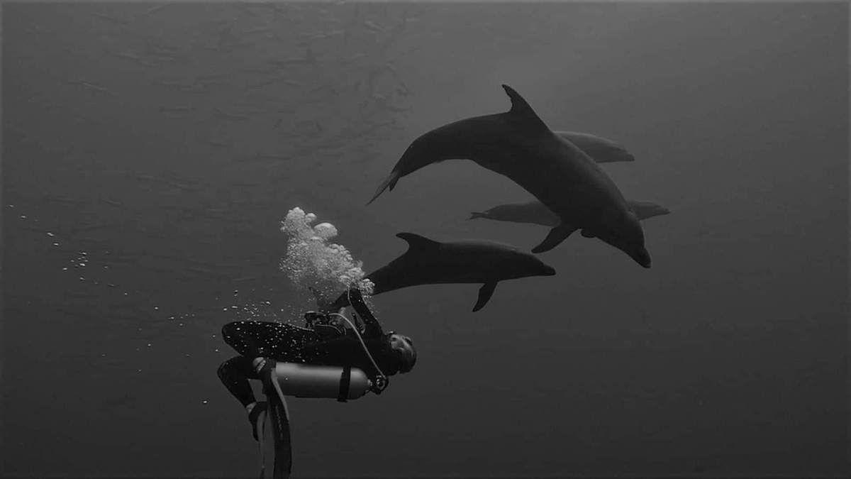 Balade avec Canelle et les dauphins de Rangiroa!bal