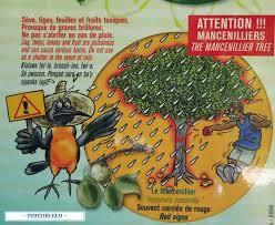 En rando avec Manu: nettoyage de notre AME, cabanes et mangrove...