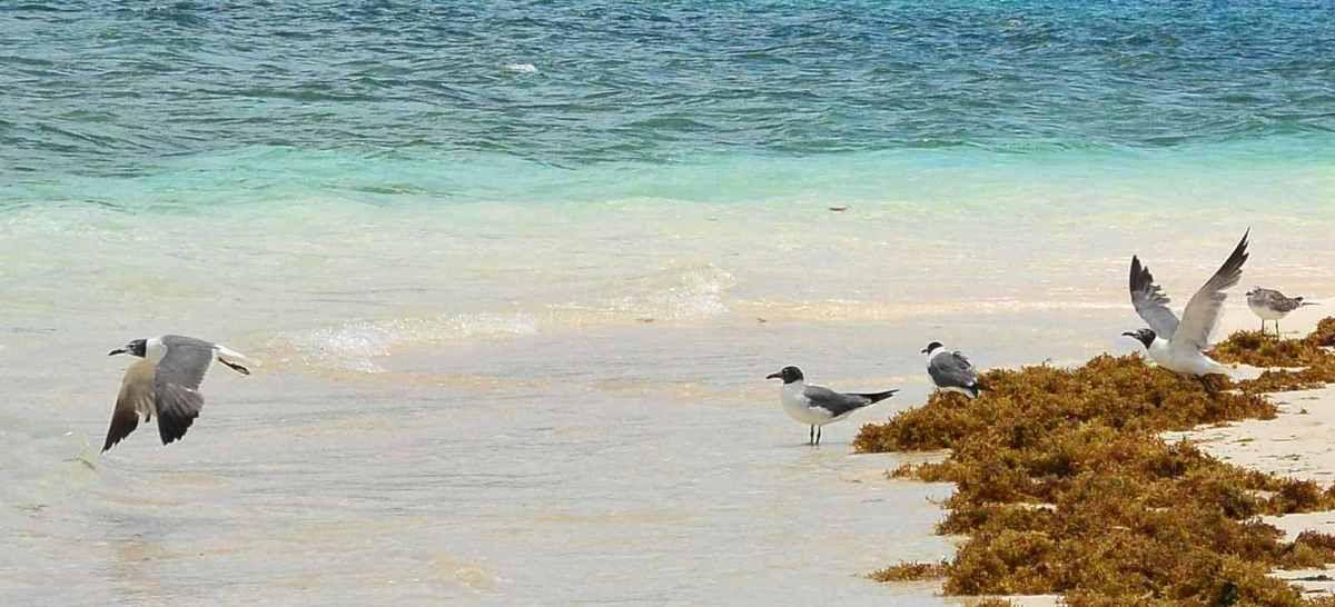 Cartes postales depuis Carriacou et ses îles...