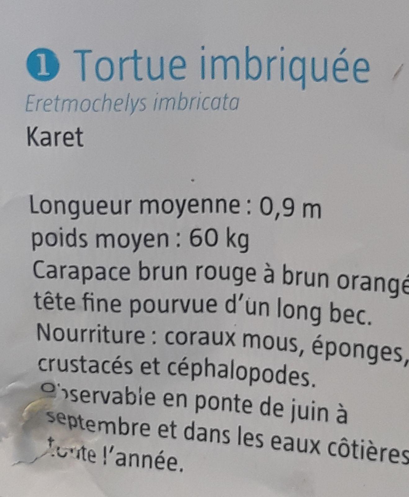 NOTRE AME: tortues vertes et plongée en bassine !