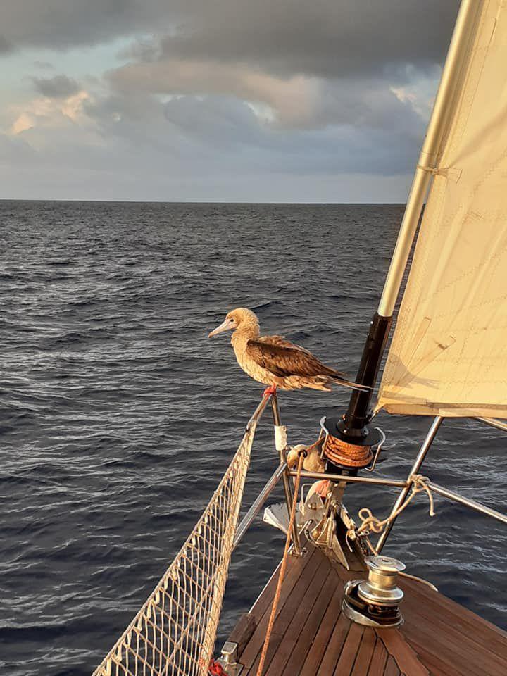Les Mamarossa dans le Pacifique !