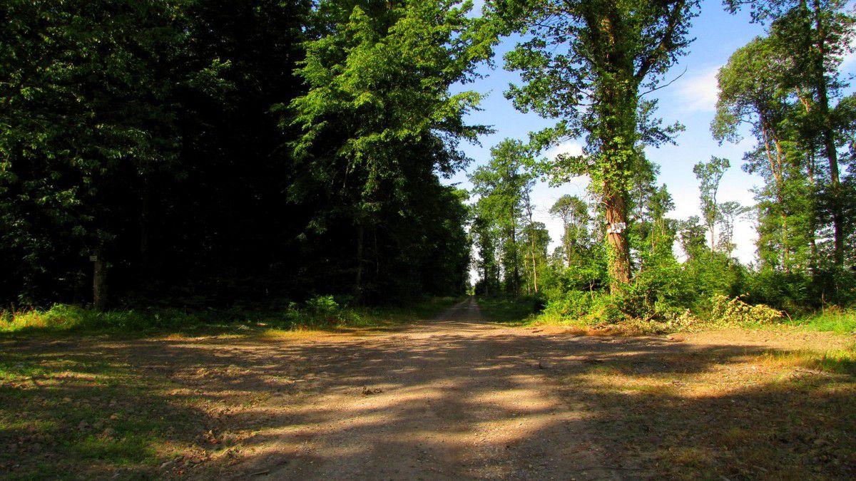 1500 km de randonnées en forêt de Retz