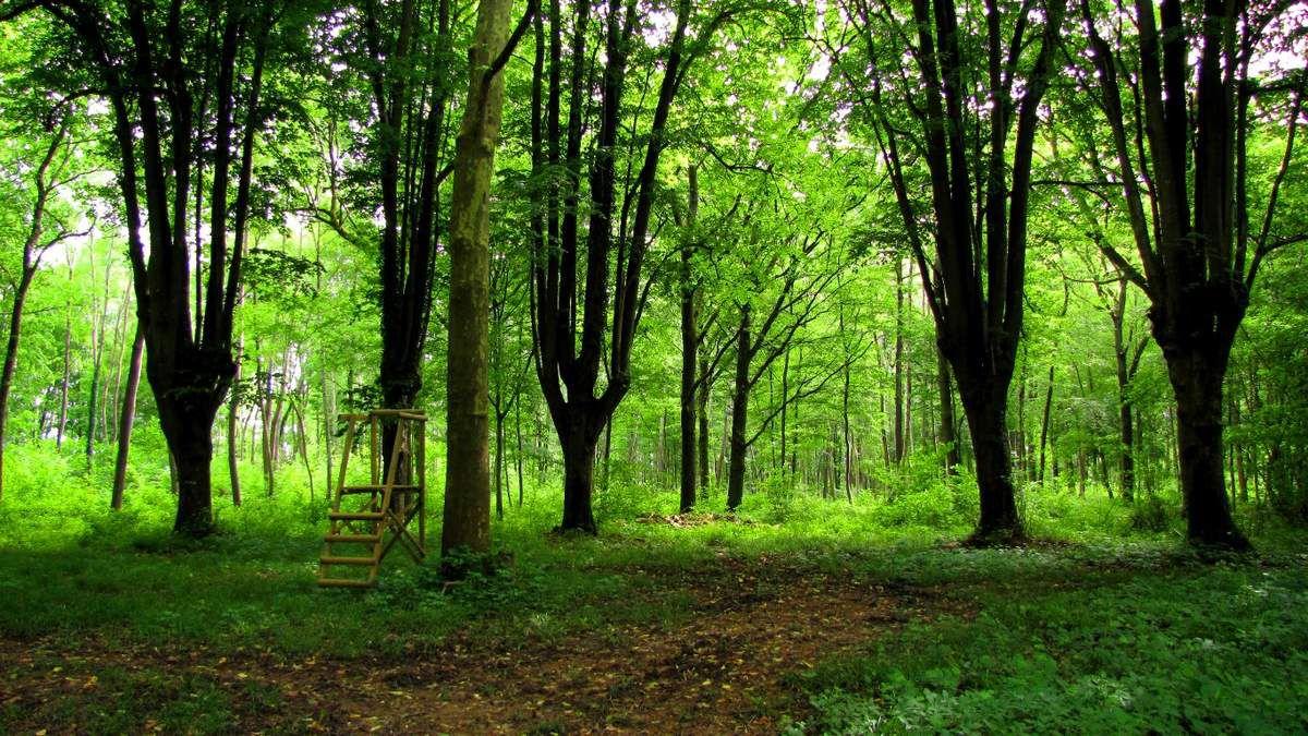 Helico_48_06_2016_les Bois des Prêtres et du Mausolée