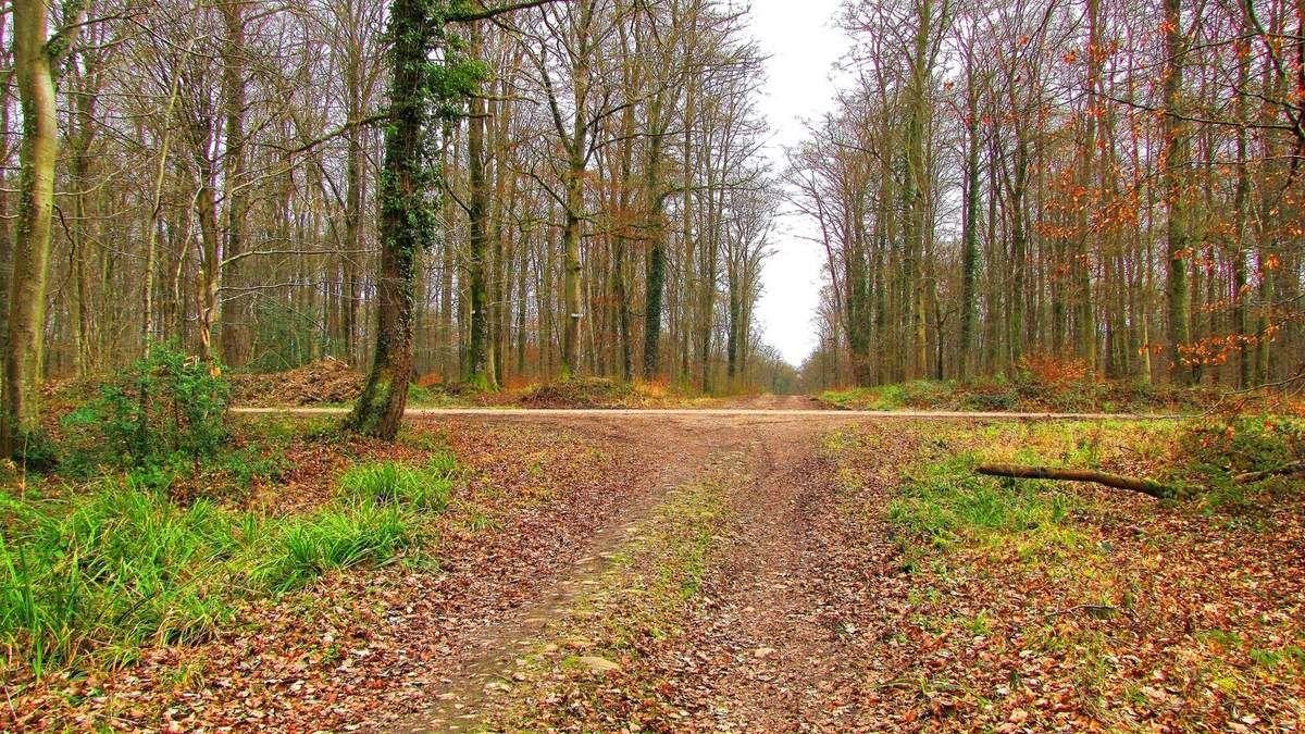 Routes Forestières en forêt de Retz