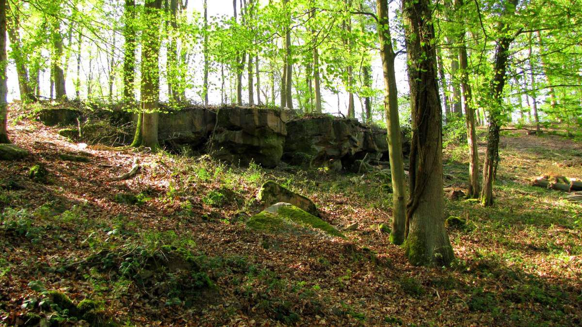 la Forêt de Retz