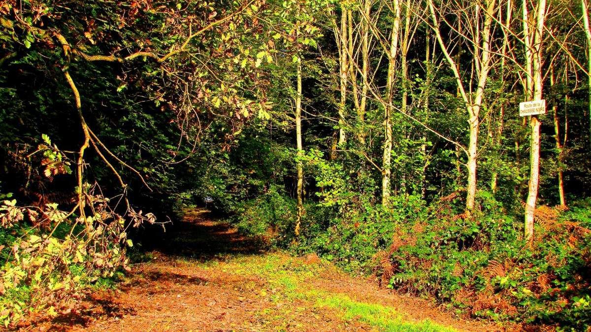 des Bois en forêt de Retz