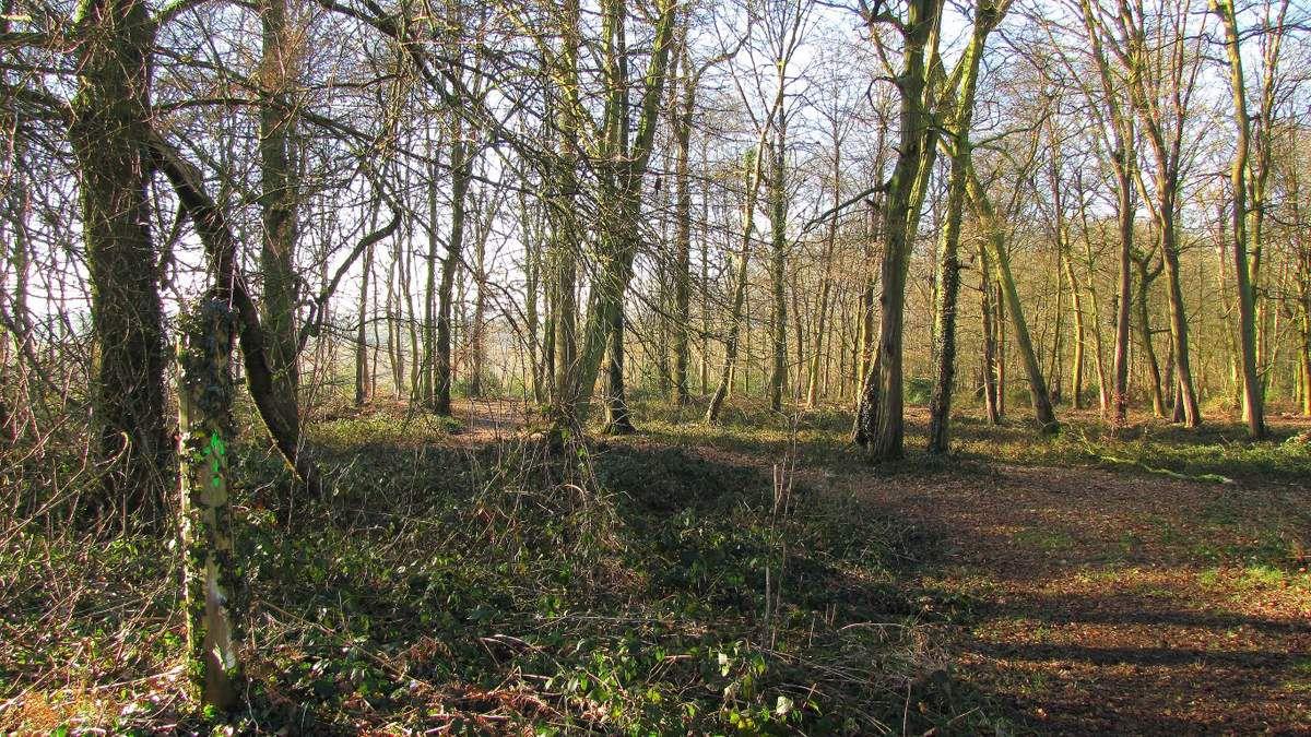 en forêt de Retz_76_02_2019_dans les forêts de Retz et de Compiègne