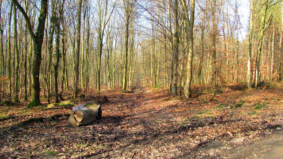en forêt de Retz_75_01_2019_promenade familiale tout temps