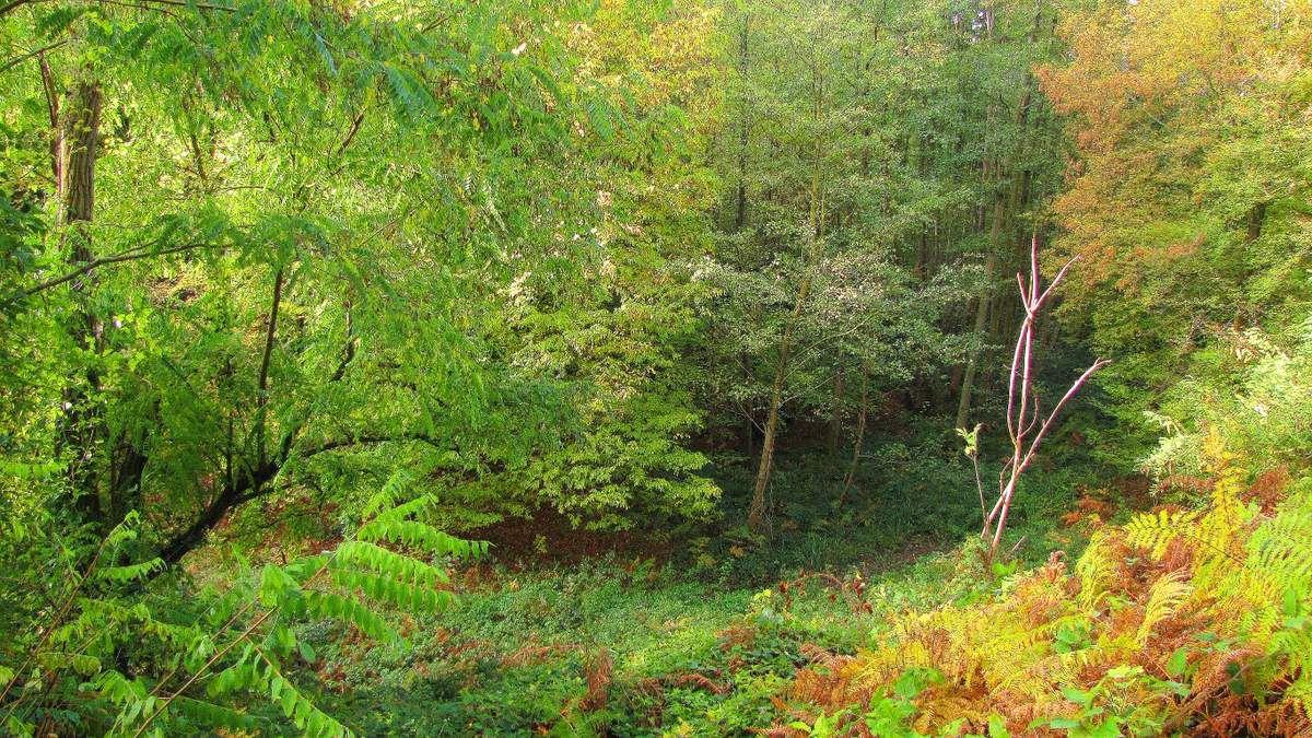 en forêt de Retz_72_11_2018_dans les forêts de Retz et de Compiègne