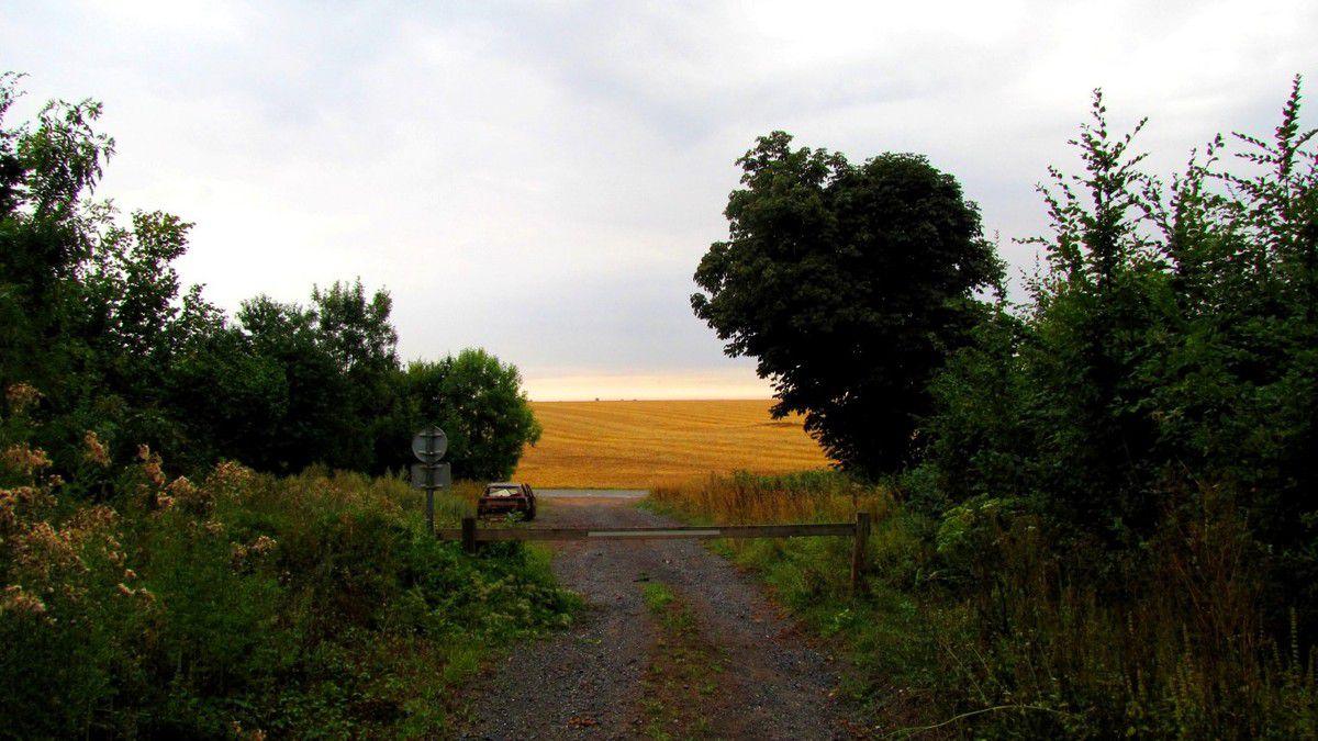 en foret de Retz_38_08_2015_Ivors_le buisson de Walligny_AR.
