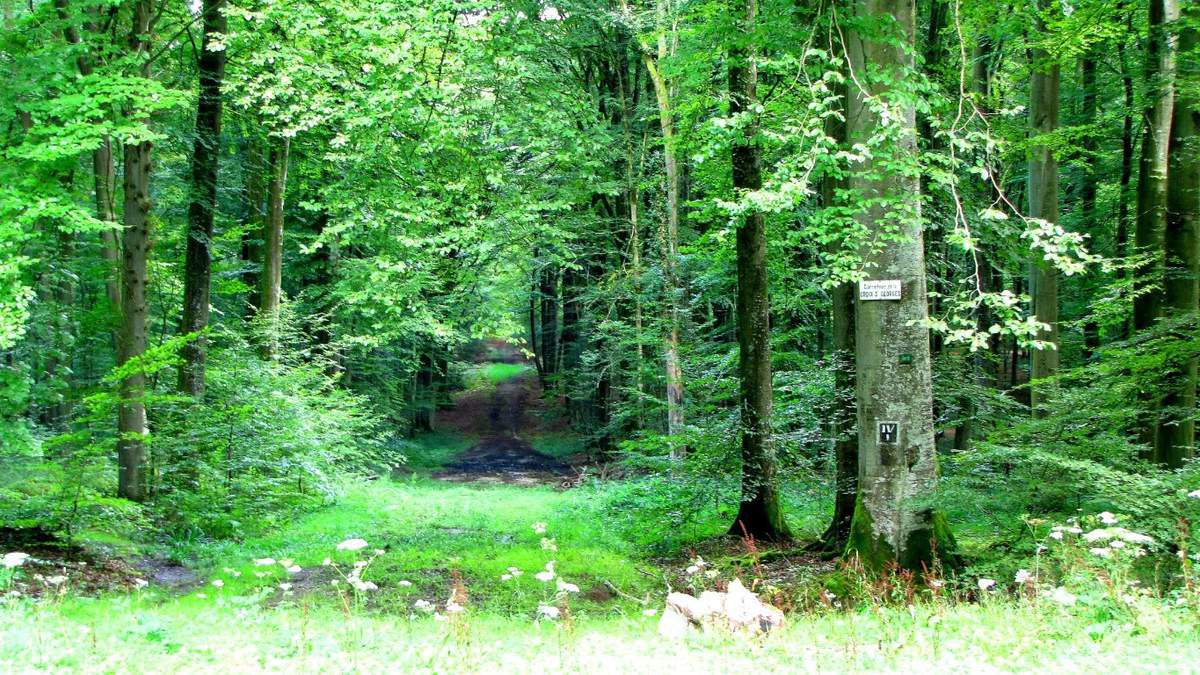 en foret de Retz_26_08_2014_Longpont_Ermitage Saint Hubert_Malva_AR.
