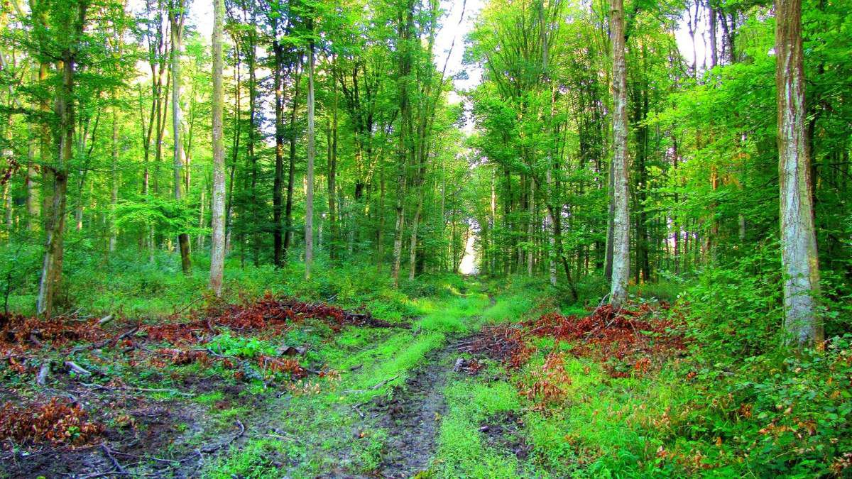 en forêt de Retz_57_09_2017_Longpont_Saint-Pierre Aigle_AR