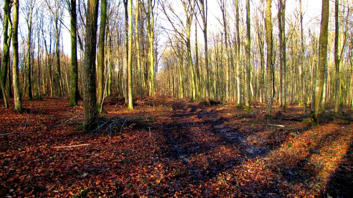 en foret de Retz_12_12_2012_Longpont_étangs de la Ramée_AR.