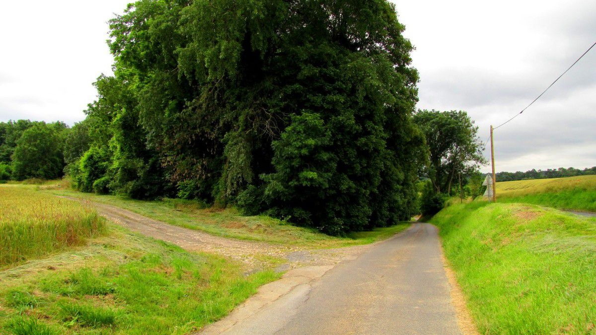en foret de Retz_48_06_2016_les Bois des Prêtres et du Mausolée