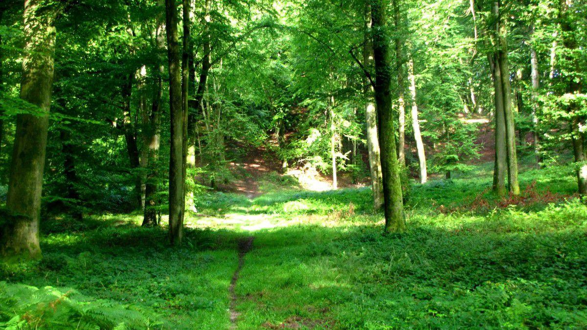 en forêt de Retz_8_08_2012_Longpont_les Têtes de Chavigny_AR.