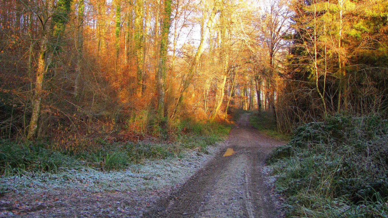 en forêt de Retz_des carrefours sans nom