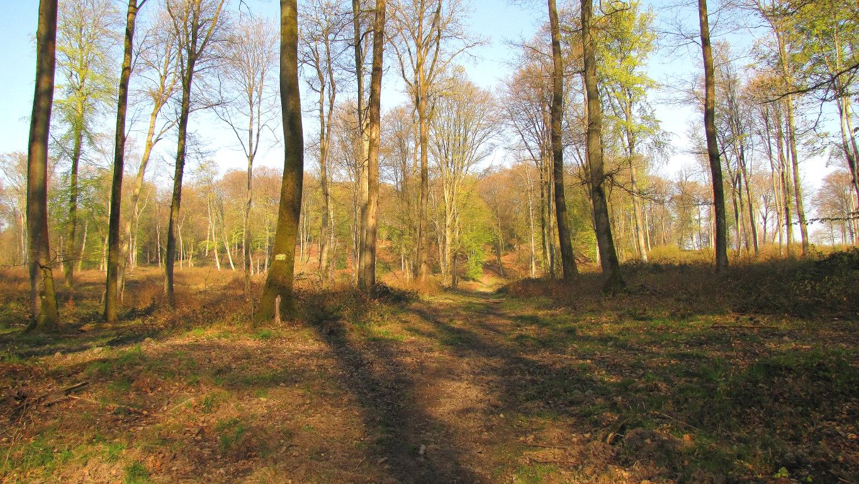 le GR11A dans la Forêt de Retz