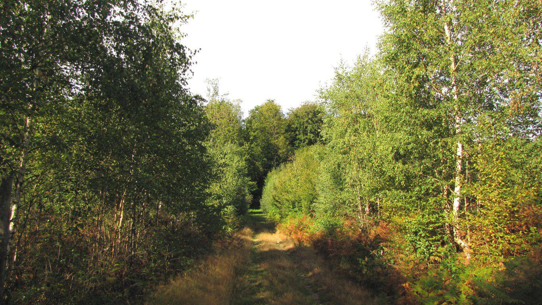 en forêt de Retz_83_08_2020_les Champs Mentard_le Fond d'Argent